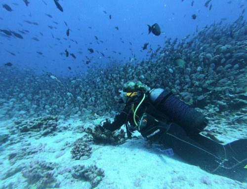 Draft Bill to Facilitate Greece Diving Tourism Set for Parliament